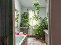 Plants In Bathrooms Ideas by Bathroom Plants Style Home Design Fancy With Bathroom Plants Home
