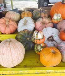 Best Pumpkin Patch Minneapolis by Sally U0027s Pumpkin Patch Farmers Market 967 W Princeton Dr