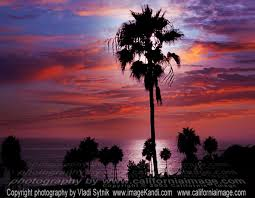 Palms And Skies California Beach Sunset Photo