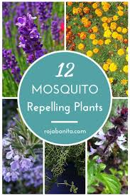 59 Best Images About Dreaming - Outdoor Living On Pinterest ... Mosquitoproofing Your Garden French Gardener Dishes Mosquito Control Backyard Ponds Home Outdoor Decoration How To Reclaim Yard From Mosquitoes Wisconsin Mommy Mosquitoproof 0501171 Youtube Natural Proof This Year Image 59 Best Images About Dreaming Living On Pinterest 9 Ways Mosquitoproof For Summer Drainage Medium Tips Hgtvs Decorating Design Blog Hgtv