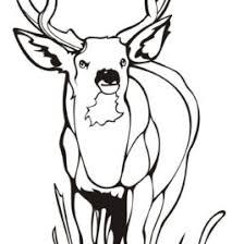45 Deer Templates Animal Free Premium Key Coloring Page