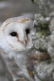 150 Best Barn Owls Images On Pinterest | Barn Owls, Children And ... 6 Things About Guardians Of Gahoole That Were Actually Really Feather Felting Soren The Barn Owl Great Grey Crochet Coryn Heroes Wiki Fandom Powered By Wikia X Gylfie Youtube 199 Best Owls Images On Pinterest Owls Beautiful Owl Disgusted With Legend Of The Guardians Owls Gahoole Images Collider Barn Gaubuendia Deviantart Legend Guardians Legend Poster Hd Wallpaper And The