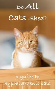 Cats That Don t Shed A Guide To Hypoallergenic Cat Breeds