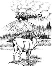 Click To See Printable Version Of Mule Deer In Lassen Volcanic National Park Coloring Page