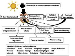 vitamin d and the skin focus on a complex relationship nov 2015