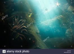 Pacific Undersea Gardens Underwater Aquarium Victoria Vancouver