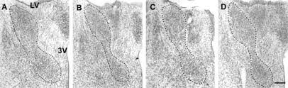 Bed Nucleus Of The Stria Terminalis by Control Of Cell Number In The Bed Nucleus Of The Stria Terminalis