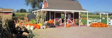 The Great Pumpkin Patch Pueblo Colorado by Corn Maze Pumpkin Picking Heirloom Pumpkins Hayrides Grain Pit