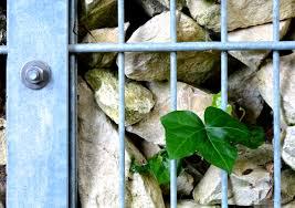 100 Gabion House Free Images Rock Wood Leaf Window Green Garden Fauna Stones