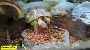 Halloween Hermit Crab by The Turtle Tortoise Is Eating Plus Baby Phyton Snake And Hermit