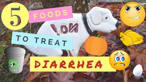 Pumpkin Causes Dog Diarrhea by 5 Foods To Treat Diarrhea Youtube