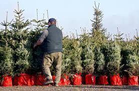 klimaschutz wird immer wichtiger weihnachtsbaum im