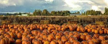Pumpkin Patch In Long Island New York by New England Fall Events The Best Maine Guide To Pyo Pumpkin