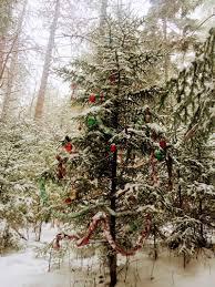 Christmas Tree Farm Lincoln Nebraska by Christmas New Hampshire Public Radio
