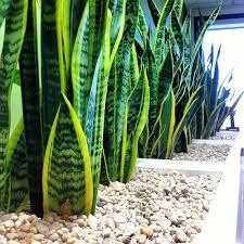 Fantastical fice Plants No Light Creative Design Indoor Plants