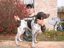 German Shorthaired Pointer Shed Hunter by 1 Male Gsp Pup Hunting