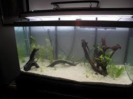 mon 1er aquarium 300l