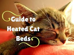 Kh Thermo Kitty Heated Cat Bed by The Best Heated Cat Beds In 2017 Review Best Of My Cat