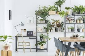 büropflanzen die besten pflanzen für ein gutes raumklima