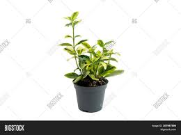 100 Fresh Home And Garden Concept Image Photo Free Trial Bigstock