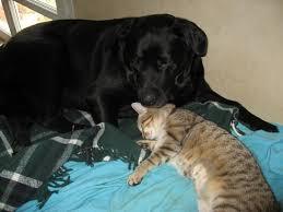 comment empecher chien de monter sur le canapé comment empecher mon chien de monter sur le canapé