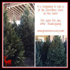 Fraser Fir Christmas Trees Nc by Christmas Trees