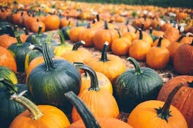 Faulkner County Pumpkin Patch by Visiting Pumpkin Patches In Kansas City