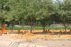 Schnepf Farms Halloween 2017 by Fall In Phoenix It Must Be Time For The Schnepf Farms Pumpkin