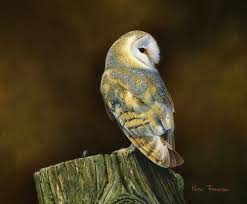 Barn Owl - Kim Thompson | Wildlife Art | Pinterest | Owl, Wildlife ... 382 Best Barn Owls Images On Pinterest Barn Owl Photos And Beautiful My Sisters Favorite It Used To Be Mine Pin By Hans De Graaf Uilen Bird Animal Totem Native American Zodiac Signs Birth Symbolism Meaning Dreams Spirit 1861 Snowy Saw Whets 741 Owls Birds 149 Animals 2 Snowy Owl Necklace Ceramic Pendant The Goddess Touch Animism Youtube Pole Trollgirl Deviantart