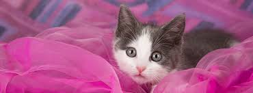 kitty cat kittycat cat community home