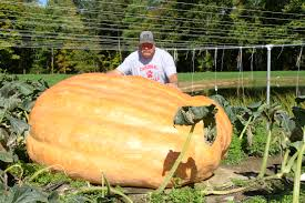 Fertilizer For Giant Pumpkins by Huntsburg U0027s King Of The Pumpkin Patch W Video Geauga County