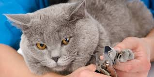 how to cut a cats nails tricks for trimming your cat s claws world s best cat litter