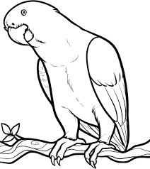 Pin Parrot Clipart Coloring Book 9