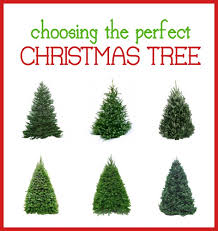 What Is The Best Christmas Tree Variety by Christmas Tree Kinds Christmas Tree