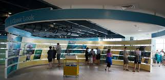Florida Power & Light pany FPL FPL Newsroom Manatee Lagoon