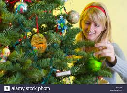 Noble Christmas Trees Vancouver Wa by Noble Fir Evergreen Stock Photos U0026 Noble Fir Evergreen Stock