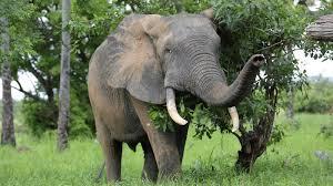 Wildlife Of The West African Savannah Unfamiliar And Under Threat