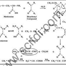 Formation Of Acrylamide In Food Ref Mottram Wedzicha 2002