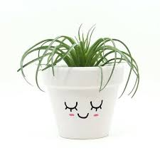Best Pot Plant For Bathroom by Indoor Plant Holders U2013 Affordinsurrates Com