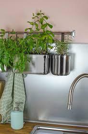 frische kräuter in der küche küche kräuter herbs