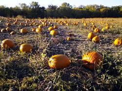 Central Wisconsin Pumpkin Patches by Farmer Johns Pumpkin Patch