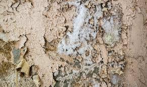 die blumen des bösen salzausblühungen im mauerwerk