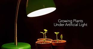 what you need to for growing plants indoors artificial
