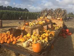 Pumpkin Patch Sf by 8 Charming Pumpkin Patches Around San Francisco