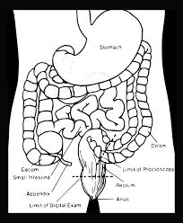 Fresh Anatomy Coloring Pages 22 On Free Colouring With