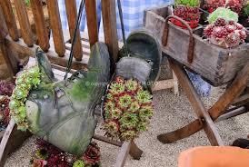 Sempervivum Succulent Plants In Old Shoes And Rustic Wooden Crates Planter Pot Containers For A Funny