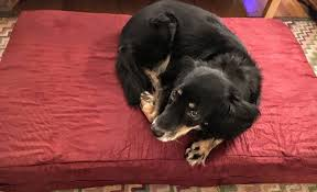Mammoth Dog Beds by Big Barker Dog Bed Review The Sleep Sherpa