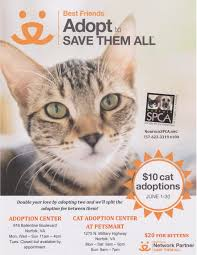 adopt a cat adoptable pets norfolk spca