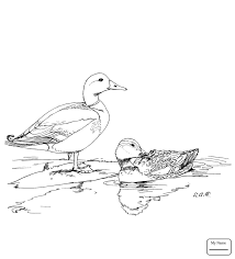 Coloring Pages For Kids Birds Mandarin Ducks