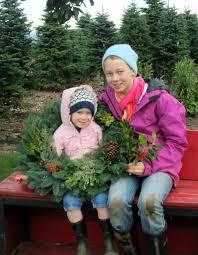 Nordmann Fir Christmas Tree Smell by Christmas Trees Janzen Farms Llc